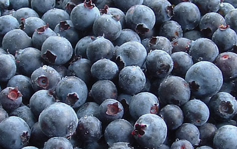 The Awesome Benefits Of BlueBerries| The Antioxidant Powerhouse!