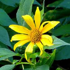 Herbs For Pain Relief (Arnica and Turmeric) | All Natural Pain Relief