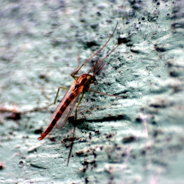Natural Ways To Help With Mosquito Problems| Bite Aids, Repellents, And More
