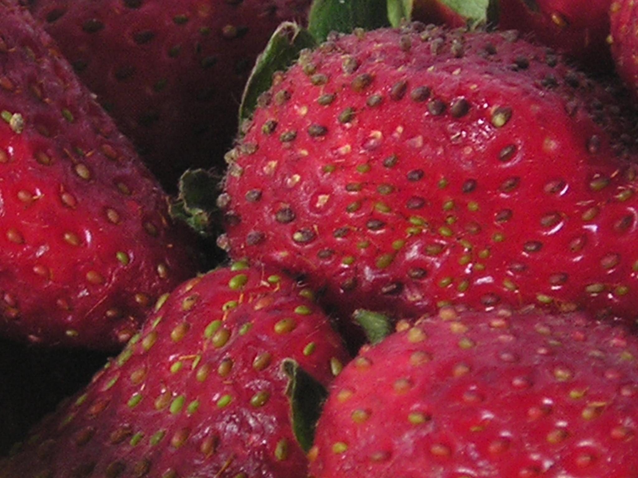 fruit strawberries 4 - photo #44